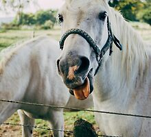 White Horse Sticking Out Tongue by PatiDesigns