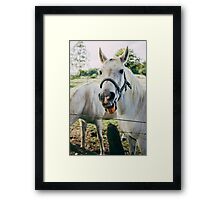 White Horse Sticking Out Tongue Framed Print