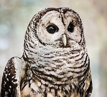 Barred Owl by Debbra Obertanec