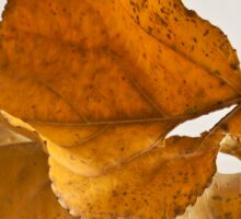Seeing Double Autumn Leaf  Sticker