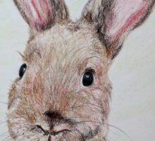 Bunny Wunny Sticker
