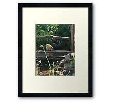 Winnie the Pooh Photograph Framed Print