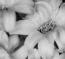 Monochromatic Flowers by SunDwn