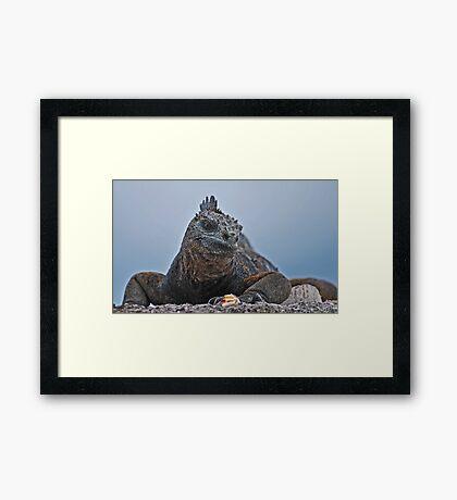 Galapagos Iguana Framed Print