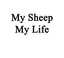 My Sheep My Life  by supernova23