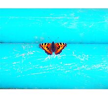 Butterfly - Unique Photography Photographic Print