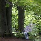 ❤‿❤  . Nostalgic green dream. Welcome to Lemkivshchyna (Ukrainian: Лeмкiвщина, Lemko: Lemkovyna (Лeмкoвина),: (Łemkowszczyzna). Tribute to Andy Warhol ! Featured a World of EOS. Views: 3465. by © Andrzej Goszcz,M.D. Ph.D