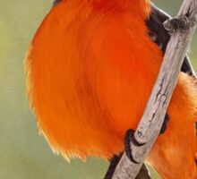 Vermillion Flycatcher Sticker