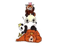 Bears And Pandas Sleeping Party Photographic Print