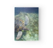 Green sea turtle (Chelonia mydas) swimming.  Hardcover Journal