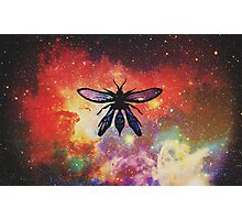 Dragon wasp  Photographic Print