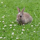 Wascally Wabbits - NZ by AndreaEL