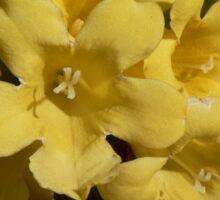 Yellow Carolina Jasmine Blossom Close Up Sticker