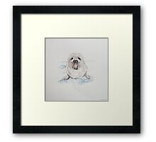 Swift Art, Baby seal Framed Print