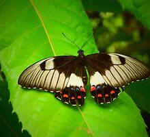 Patterned Butterfly by JaneIzzyPhoto