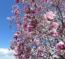 Magnolia Tree by Ceejay221