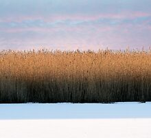 Reed the lines by Alan Mattison
