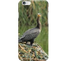 Neotropical Cormorants Next to a Lake iPhone Case/Skin
