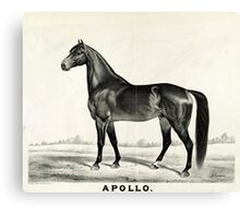 Apollo - sired by Seneca Chief - 1885 - Currier & Ives Canvas Print