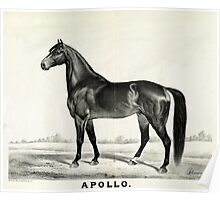 Apollo - sired by Seneca Chief - 1885 - Currier & Ives Poster
