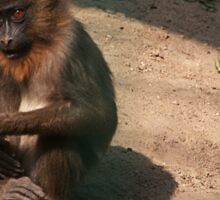 Small monkey Sticker