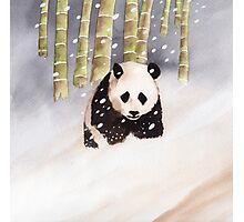 Panda In The Snow Photographic Print