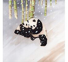 Pandas In The Snow Too Photographic Print