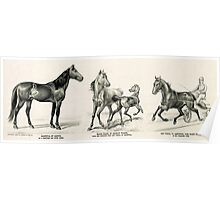 Aristotle, by Aristos - as a producer and stock horse Marie Frank - 1893 - Currier & Ives Poster