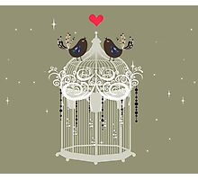 birds in a cage  Photographic Print