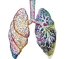 Lungs - Colours Photographic Print