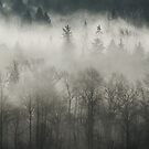 Fog Enshrouded Forest by Lisa Knechtel