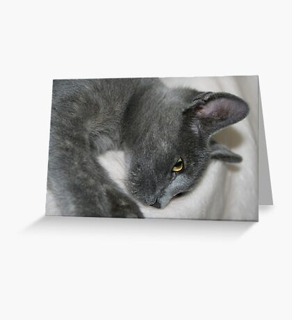 Close Up Portrait Of A Relaxed Grey Cat Greeting Card