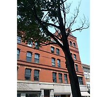 Red Brick Building and Green Maple Tree Photographic Print