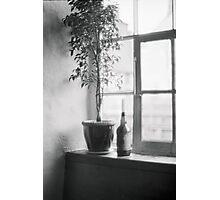 Bottle Plant Photographic Print