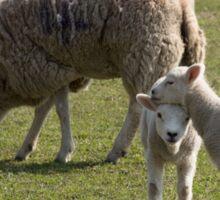 Ewe and Lambs Sticker