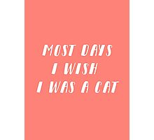 Wish I Was A Cat | Coral Photographic Print