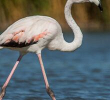 Flamingo in the water with reed background Sticker