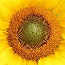 Sunflower by Alice Kahn