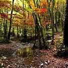 The woods by annalisa bianchetti