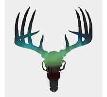 Northern Elk Photographic Print