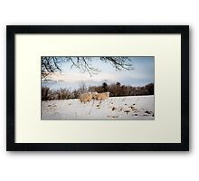 Winter Wool Framed Print