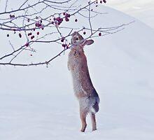 Crabapple Snow Bunny by MTBobbins