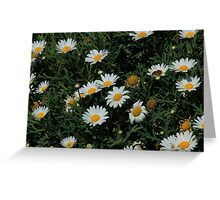 Daisies in a Garden Greeting Card
