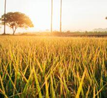 Sunrise Over Grass Field in Burmese Countryside Sticker