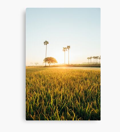 Sun Rising Over Grass Field in Burmese Countryside Canvas Print