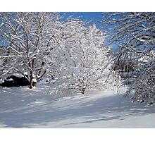 Glistening Trees ^ Photographic Print
