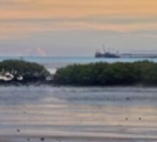 town beach mangroves  by Elliot62