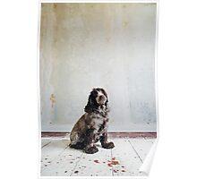 Cocker Spaniel Sitting in Shabby Apartment Poster