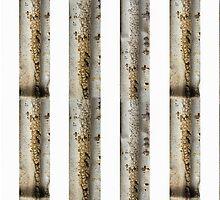 Silver Sabi Stripes by Marilyn Cornwell
