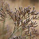 Verbena hastata by Laurie Puglia